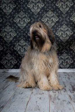 Photos Côté Gauche Christophe Golay - Studio - Séance canine